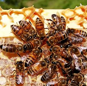 Au fil du pôle DD-RSE : abeilles, sylvothérapie